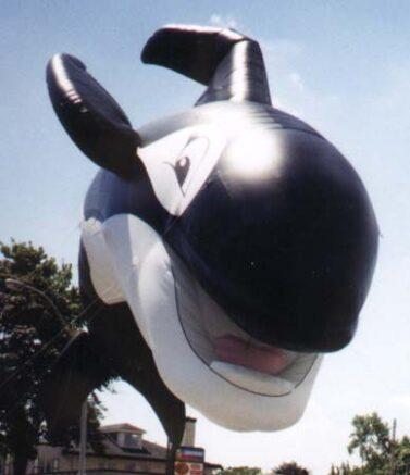 Happy Orca Whale Parade Balloon