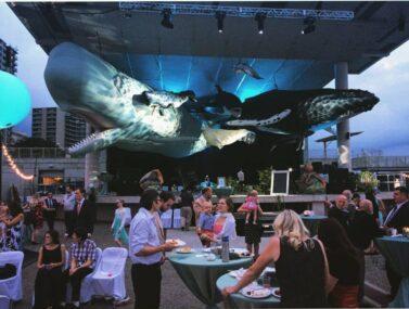 Whale Wedding