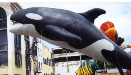Realistic Orca Parade Balloon